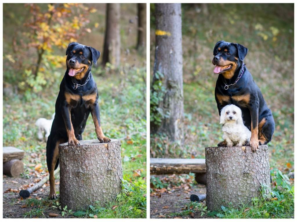fotenie psov